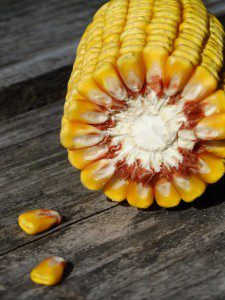 scratch-peck-feeds-organic-cracked-corn