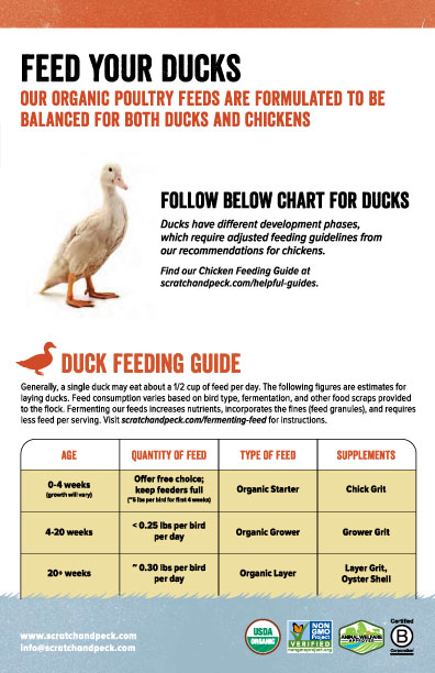 Scratch and Peck Duck Feeding Guide