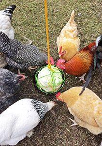 Feeding a Mixed Flock