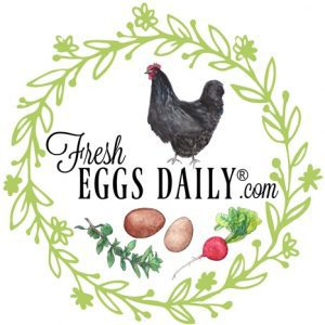 fresh-eggs-daily