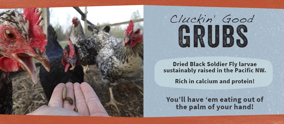 Cluckin' Good Grubs