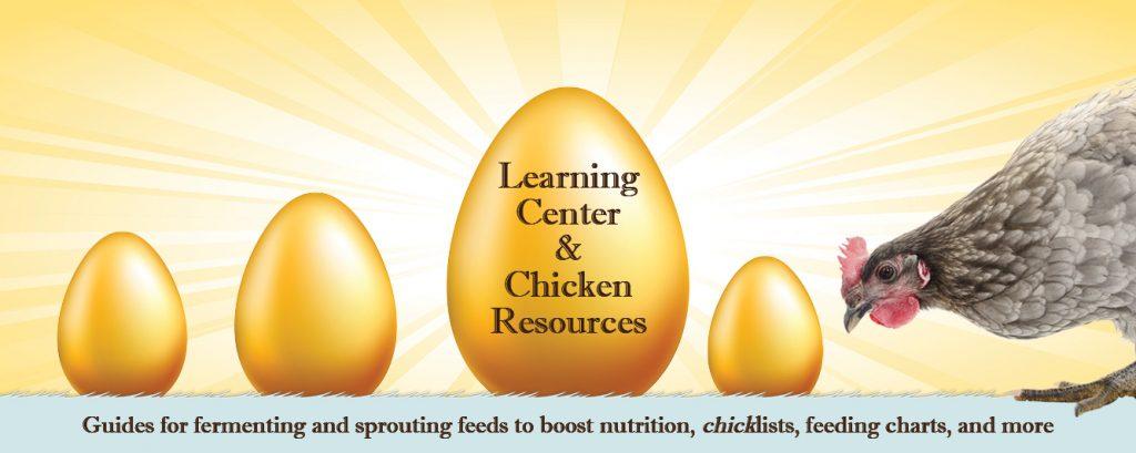 scratch-peck-feeds-golden-egg-learning-center