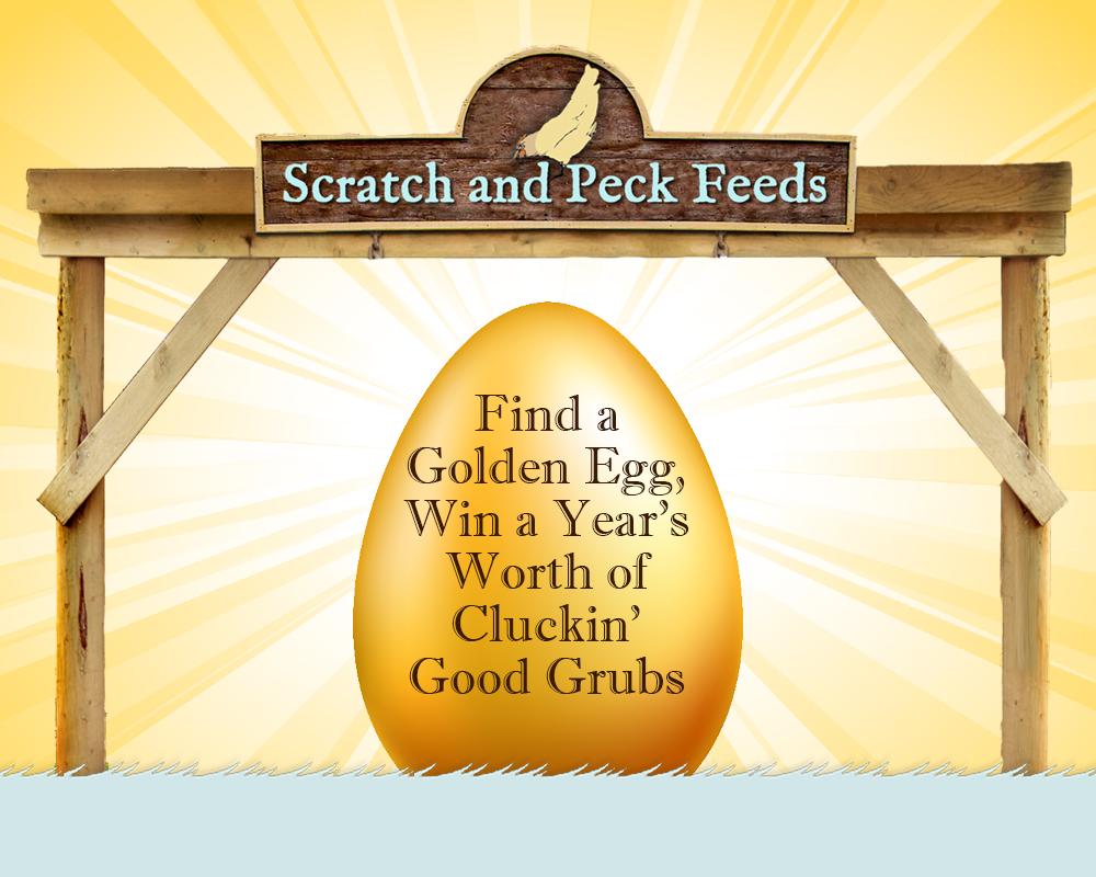 scratch-peck-feeds-golden-egg