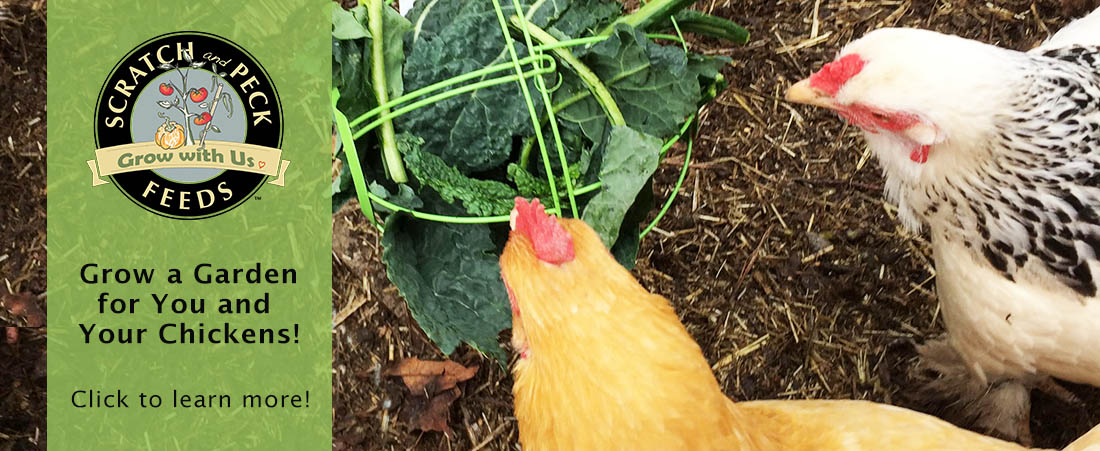 Scratch and Peck Feeds Grow with Us Garden