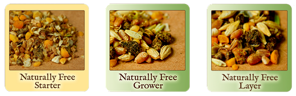 scratch-peck-feeds-naturally-free-organic-chicken-feed