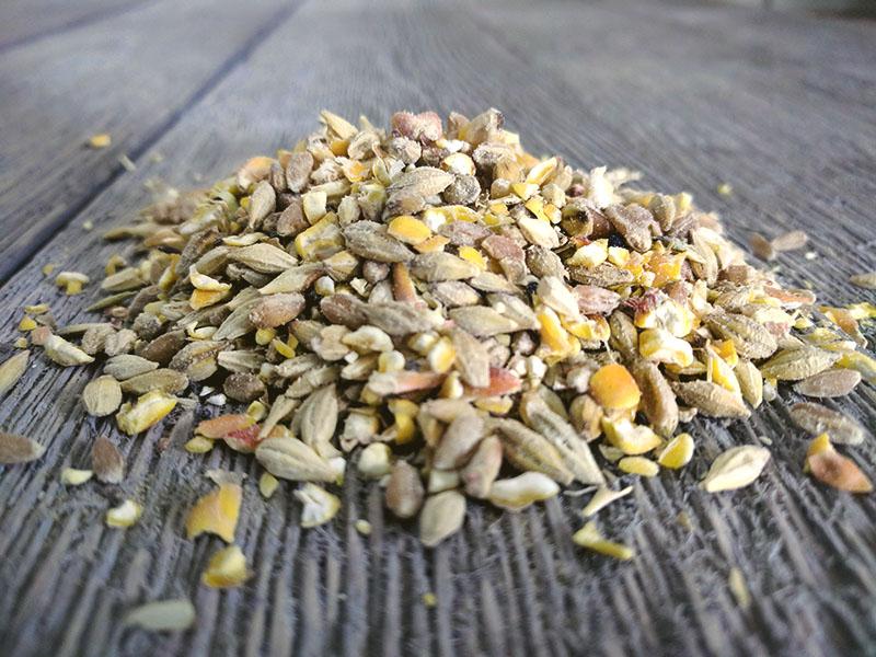 Organic Scratch 'n Corn