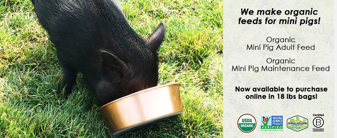scratch-peck-feeds-organic-mini-pig