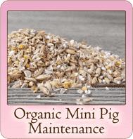 Organic Mini Pig Maintenance