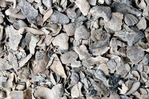 scratch-peck-feeds-oyster-shells