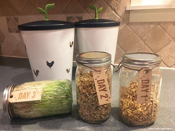 Sprout-Ferment Starter Kit